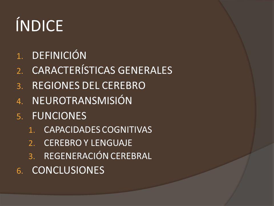 CARACTERÍSTICAS GENERALES - Esta situado en la cabeza, protegido por cráneo cerca de los aparatos de los sentidos de la vista, oído, balance, gusto y olfato.