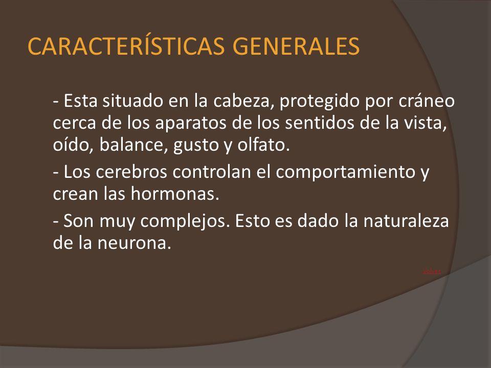 CAPACIDADES COGNITIVAS En los lóbulos parietales se desarrolla el sistema emocional y el sistema valorativo.