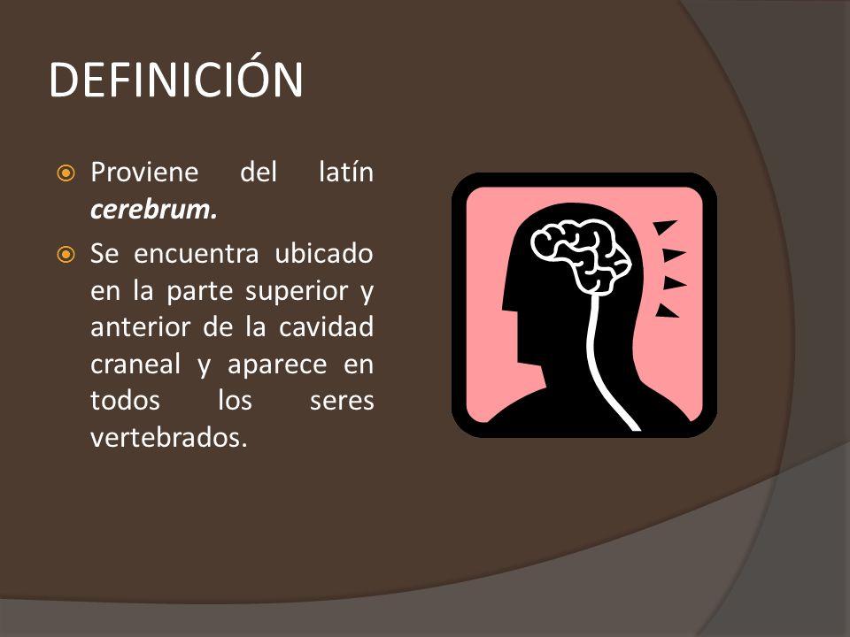 CARACTERÍSTICAS GENERALES En los vertebrados se encuentra ubicado en la cabeza, protegido por el cráneo.