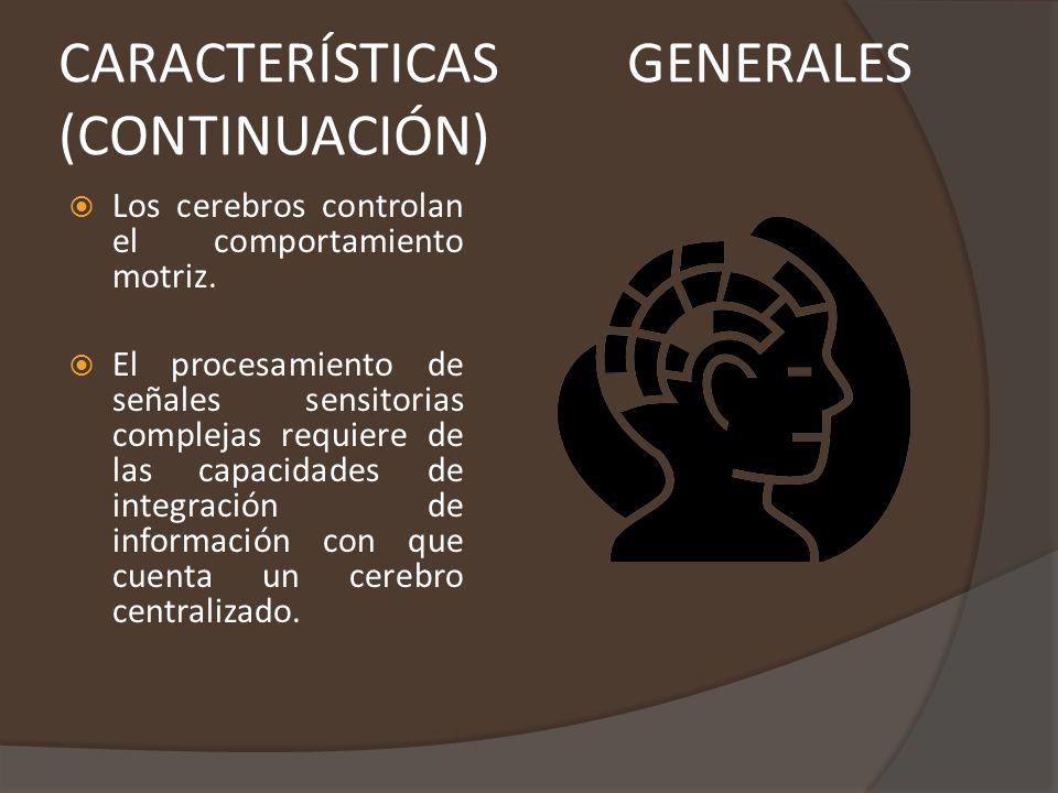 REGIONES Se divide en tres grandes regiones, el cerebro, el cerebelo y el bulbo raquídeo.