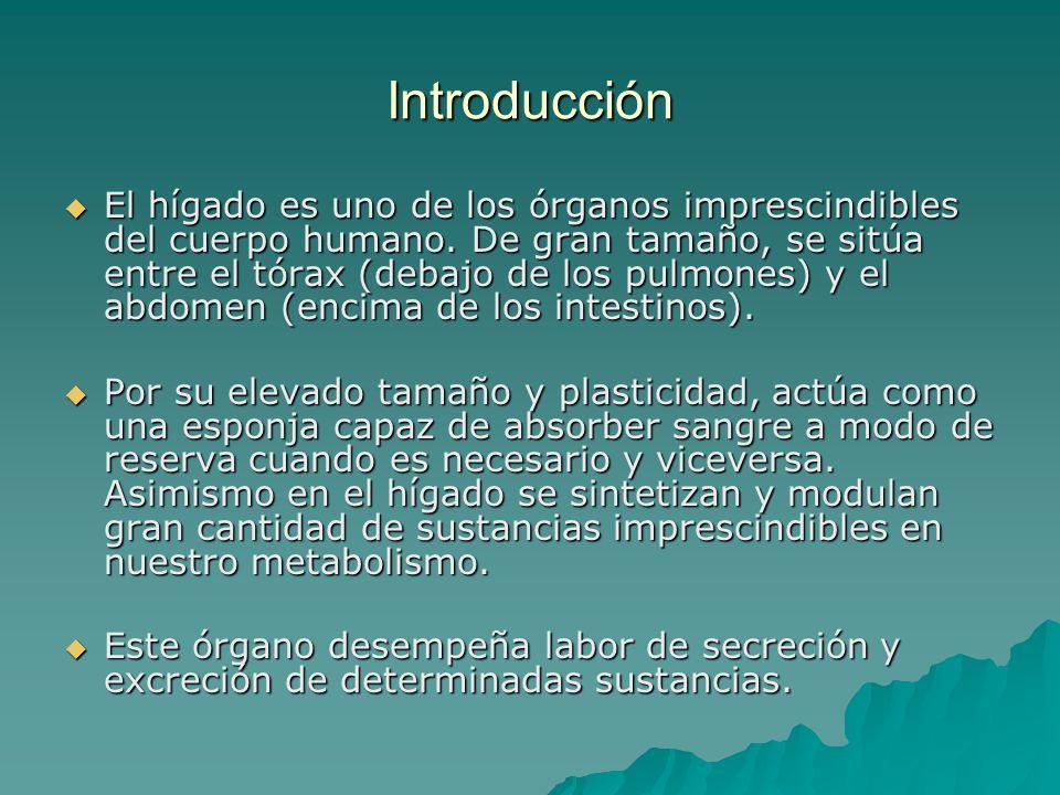 Introducción El hígado es uno de los órganos imprescindibles del cuerpo humano. De gran tamaño, se sitúa entre el tórax (debajo de los pulmones) y el