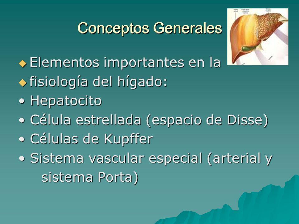 Conceptos Generales Elementos importantes en la Elementos importantes en la fisiología del hígado: fisiología del hígado: Hepatocito Hepatocito Célula