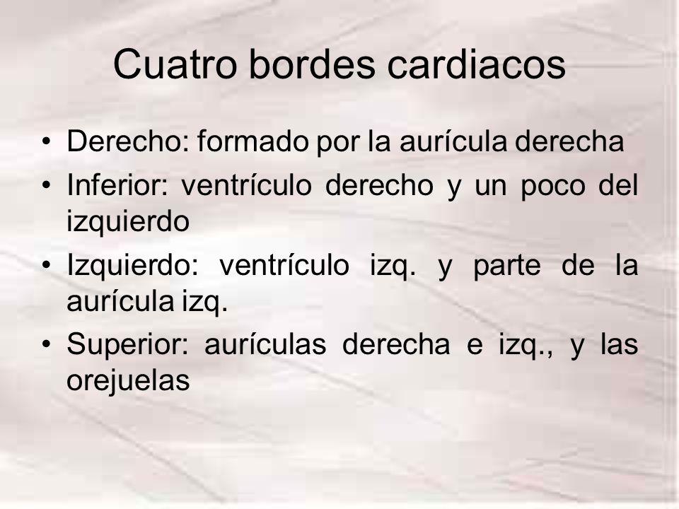 Cuatro bordes cardiacos Derecho: formado por la aurícula derecha Inferior: ventrículo derecho y un poco del izquierdo Izquierdo: ventrículo izq. y par