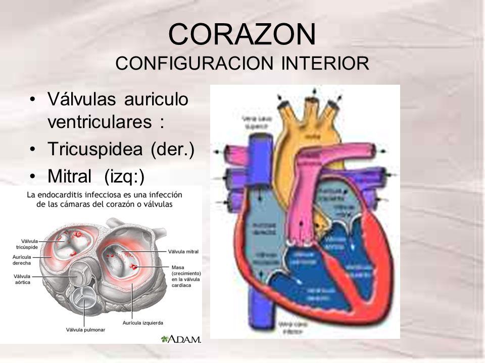 CORAZON CONFIGURACION INTERIOR Válvulas auriculo ventriculares : Tricuspidea (der.) Mitral (izq:)