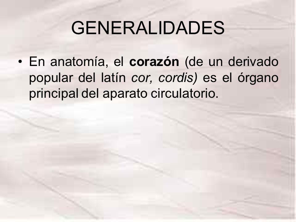 GENERALIDADES En anatomía, el corazón (de un derivado popular del latín cor, cordis) es el órgano principal del aparato circulatorio.