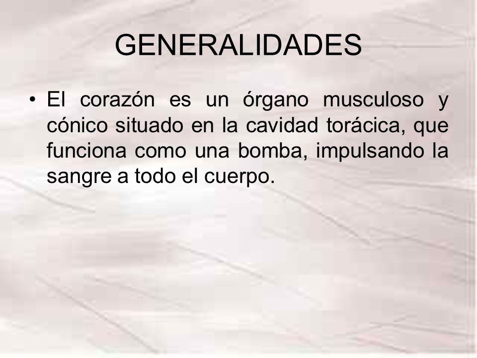 GENERALIDADES El corazón es un órgano musculoso y cónico situado en la cavidad torácica, que funciona como una bomba, impulsando la sangre a todo el c