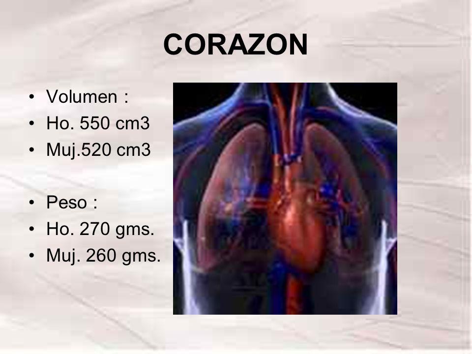 CORAZON Volumen : Ho. 550 cm3 Muj.520 cm3 Peso : Ho. 270 gms. Muj. 260 gms.