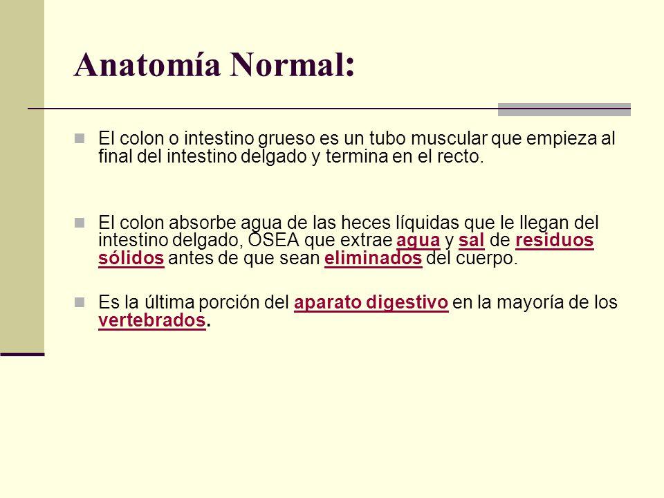 Anatomía Normal : El colon o intestino grueso es un tubo muscular que empieza al final del intestino delgado y termina en el recto. El colon absorbe a