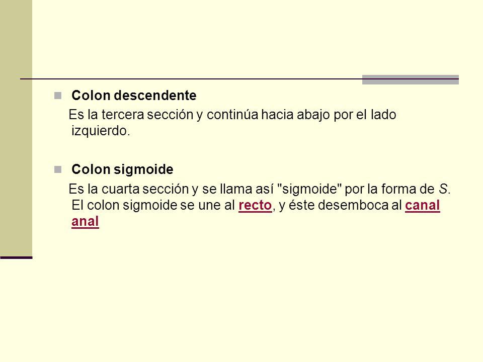 Colon descendente Es la tercera sección y continúa hacia abajo por el lado izquierdo. Colon sigmoide Es la cuarta sección y se llama así