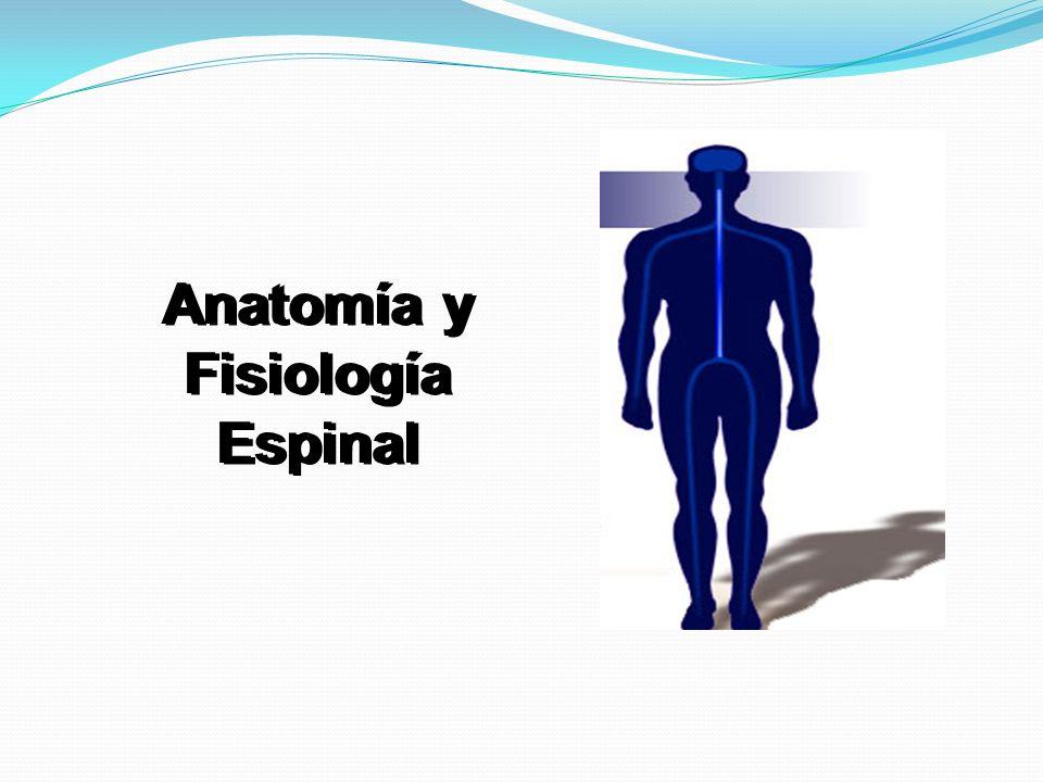 Anatomía y Fisiología Espinal