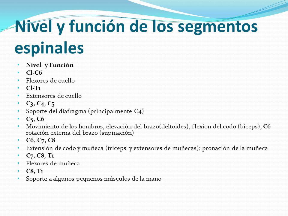 Nivel y función de los segmentos espinales Nivel y Función Cl-C6 Flexores de cuello Cl-T1 Extensores de cuello C3, C4, C5 Soporte del diafragma (princ