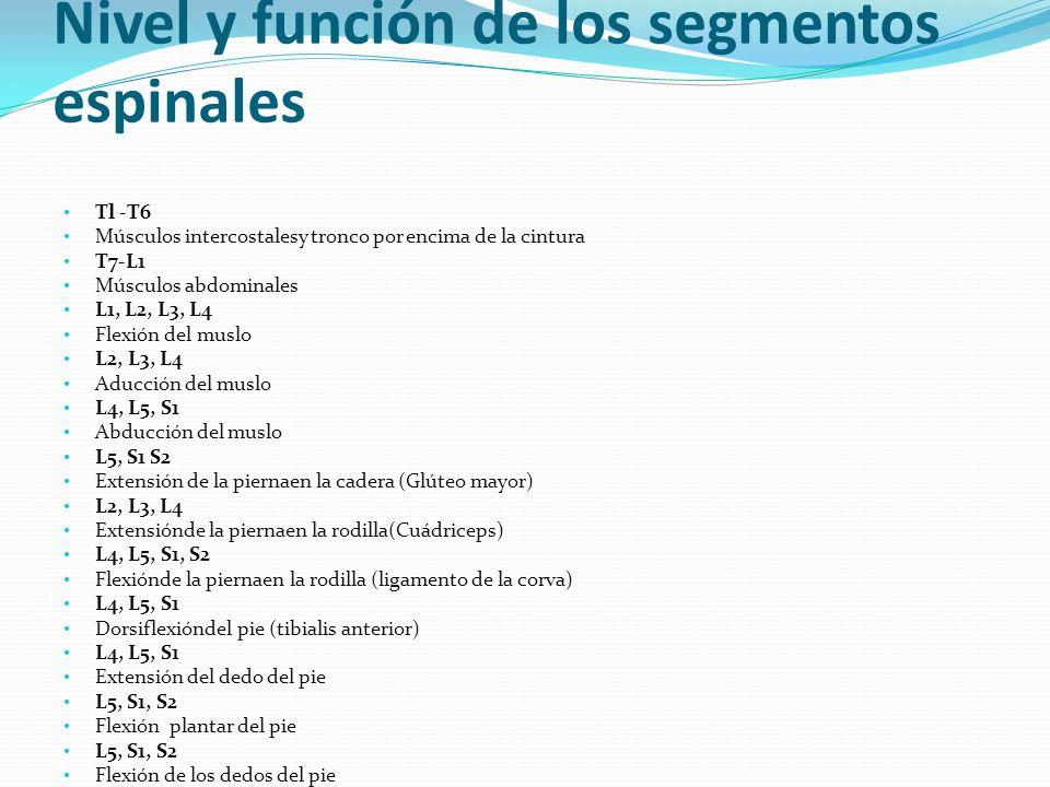 Nivel y función de los segmentos espinales Tl -T6 Músculos intercostalesy tronco por encima de la cintura T7-L1 Músculos abdominales L1, L2, L3, L4 Fl