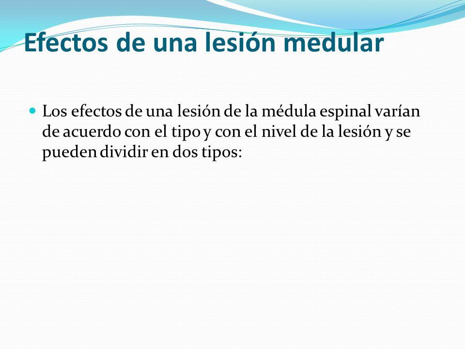 Efectos de una lesión medular Los efectos de una lesión de la médula espinal varían de acuerdo con el tipo y con el nivel de la lesión y se pueden div