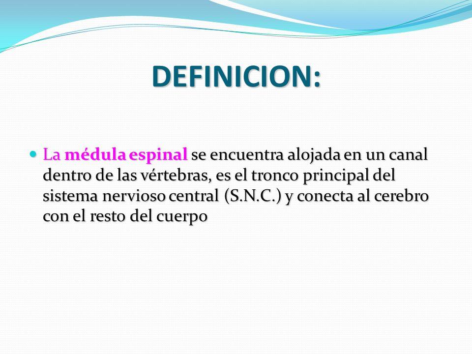DEFINICION: La médula espinal se encuentra alojada en un canal dentro de las vértebras, es el tronco principal del sistema nervioso central (S.N.C.) y