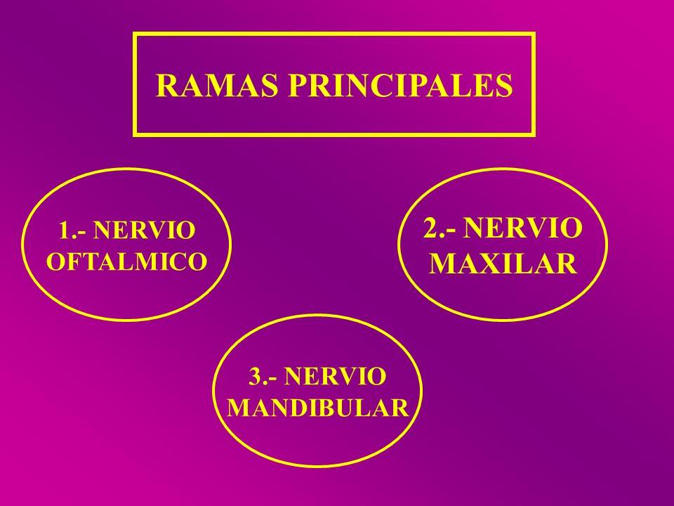RAMAS PRINCIPALES 1.- NERVIO OFTALMICO 2.- NERVIO MAXILAR 3.- NERVIO MANDIBULAR