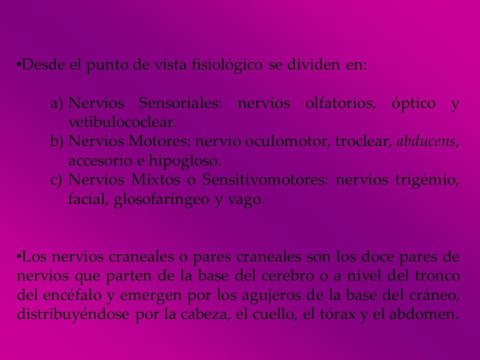 Desde el punto de vista fisiológico se dividen en: a)Nervios Sensoriales: nervios olfatorios, óptico y vetibulococlear. b)Nervios Motores: nervio ocul