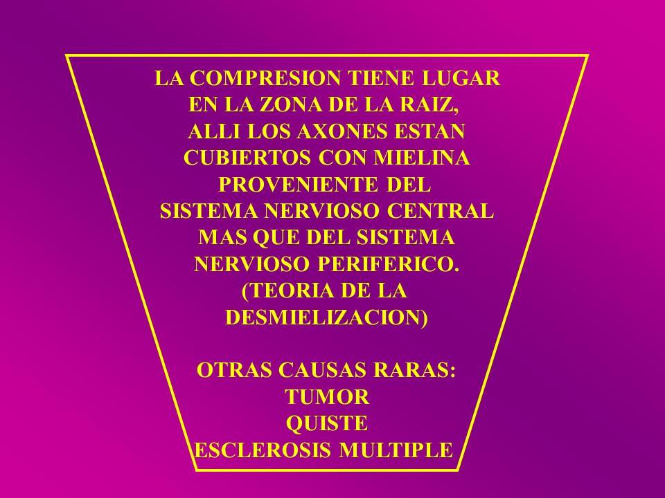 LA COMPRESION TIENE LUGAR EN LA ZONA DE LA RAIZ, ALLI LOS AXONES ESTAN CUBIERTOS CON MIELINA PROVENIENTE DEL SISTEMA NERVIOSO CENTRAL MAS QUE DEL SIST