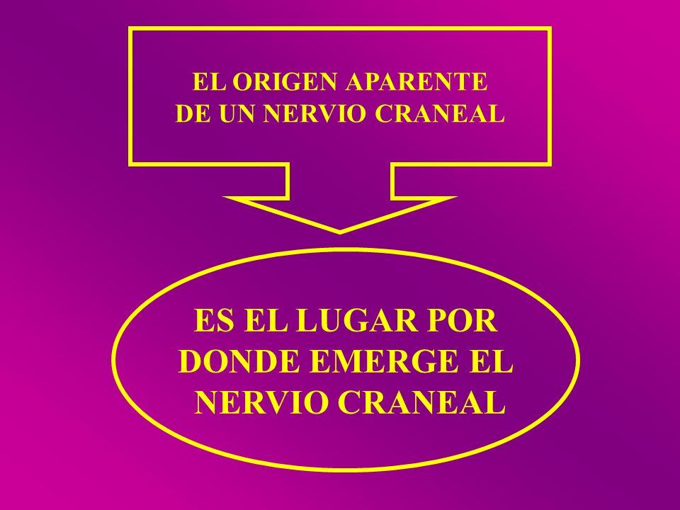 EL ORIGEN APARENTE DE UN NERVIO CRANEAL ES EL LUGAR POR DONDE EMERGE EL NERVIO CRANEAL