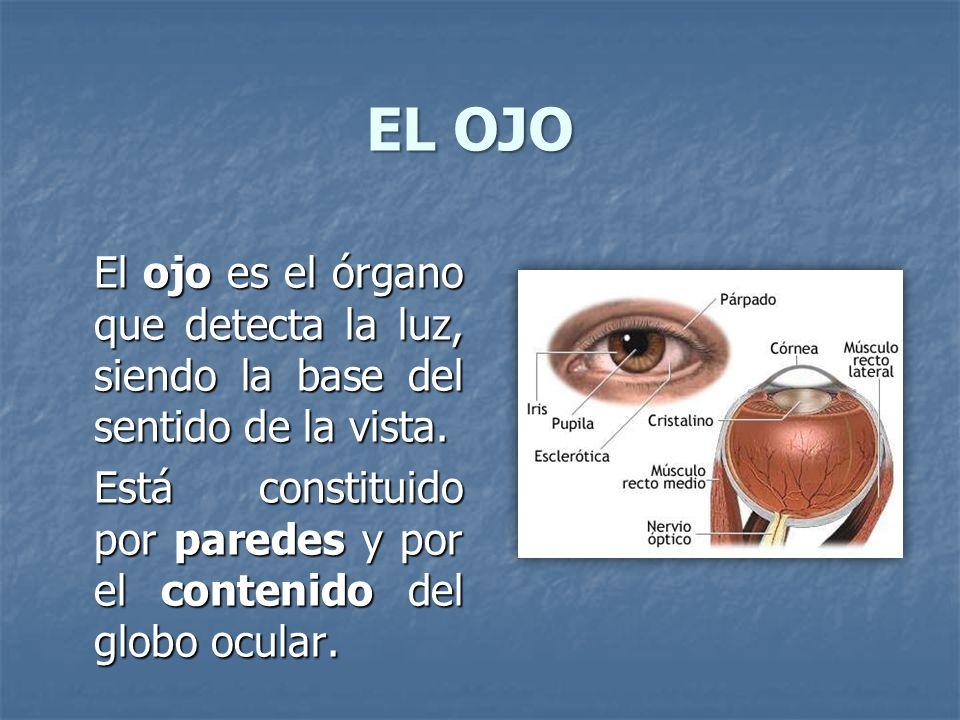 EL OJO El ojo es el órgano que detecta la luz, siendo la base del sentido de la vista. Está constituido por paredes y por el contenido del globo ocula