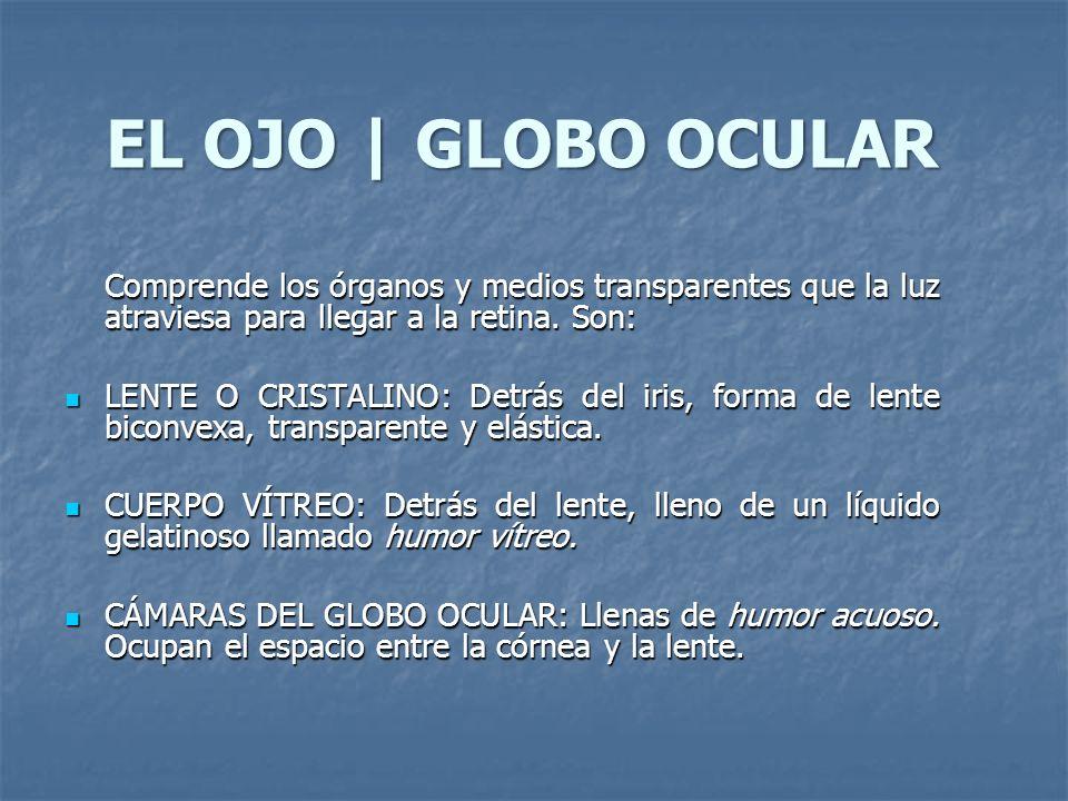 EL OJO   ESTRUCTURAS ACCESORIAS MÚSCULOS EXTRÍNSECOS: Sujetan al ojo y dan movilidad.