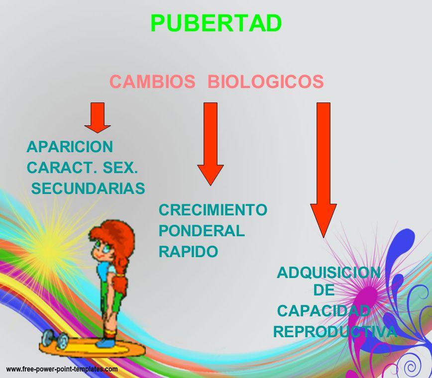 CAMBIOS PUBERALES OBSERVABLES ENDOCRINO MADURACION DE LOS 2 EJES ENDOCRINOS EJE HIPOTALAMICO- HIPOFISIS HIPOFISIS ADRENAL GONADAL GROSOR EN CAMBIOS FUNCIONALES CORTEZA SUPRARENAL DEL S.