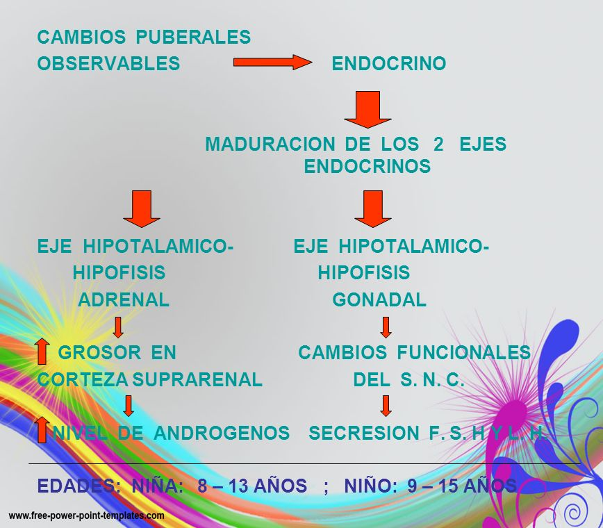 CAMBIOS PUBERALES OBSERVABLES ENDOCRINO MADURACION DE LOS 2 EJES ENDOCRINOS EJE HIPOTALAMICO- HIPOFISIS HIPOFISIS ADRENAL GONADAL GROSOR EN CAMBIOS FU