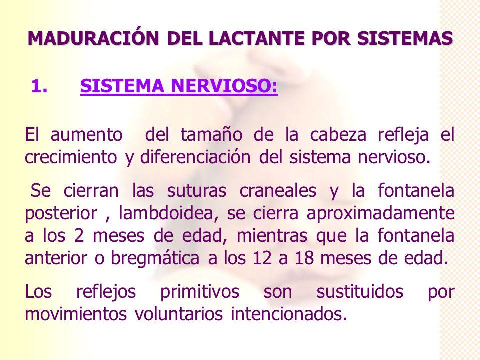 MADURACIÓN DEL LACTANTE POR SISTEMAS 1. SISTEMA NERVIOSO: El aumento del tamaño de la cabeza refleja el crecimiento y diferenciación del sistema nervi