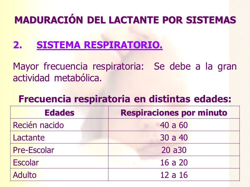 MADURACIÓN DEL LACTANTE POR SISTEMAS 2. SISTEMA RESPIRATORIO. Mayor frecuencia respiratoria: Se debe a la gran actividad metabólica. Frecuencia respir