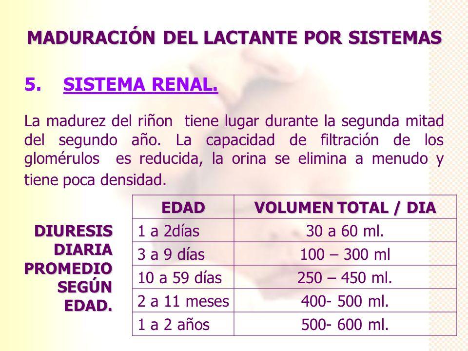 MADURACIÓN DEL LACTANTE POR SISTEMAS 5. SISTEMA RENAL. La madurez del riñon tiene lugar durante la segunda mitad del segundo año. La capacidad de filt