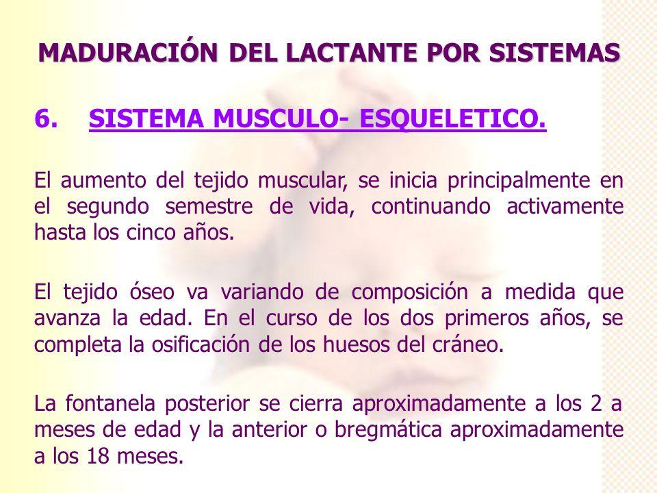 MADURACIÓN DEL LACTANTE POR SISTEMAS 6. SISTEMA MUSCULO- ESQUELETICO. El aumento del tejido muscular, se inicia principalmente en el segundo semestre