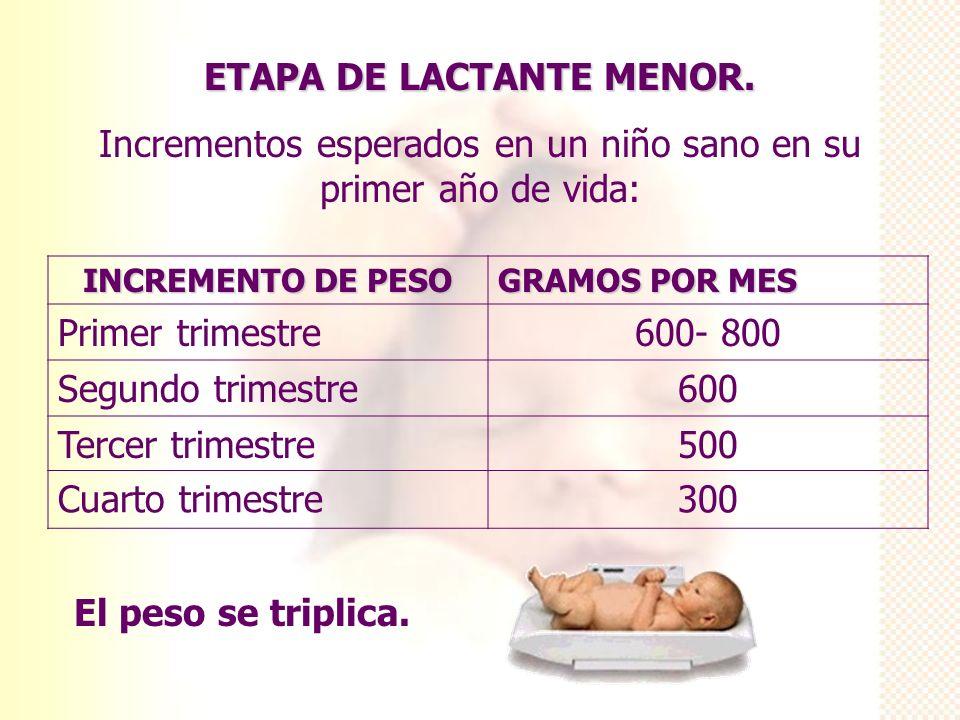 ETAPA DE LACTANTE MENOR. Incrementos esperados en un niño sano en su primer año de vida: INCREMENTO DE PESO GRAMOS POR MES Primer trimestre600- 800 Se