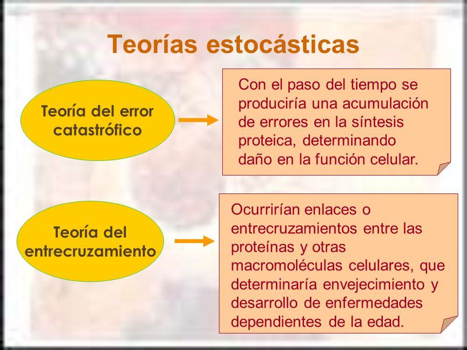 Teorías estocásticas Teoría del error catastrófico Con el paso del tiempo se produciría una acumulación de errores en la síntesis proteica, determinan