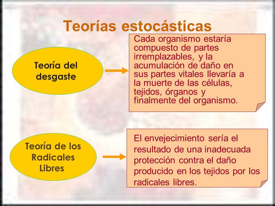 Teorías estocásticas Teoría del desgaste Cada organismo estaría compuesto de partes irremplazables, y la acumulación de daño en sus partes vitales lle
