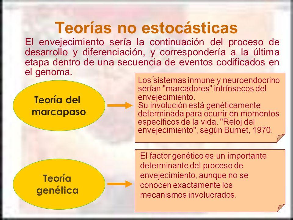 Teorías no estocásticas Teoría del marcapaso. Teoría genética El envejecimiento sería la continuación del proceso de desarrollo y diferenciación, y co