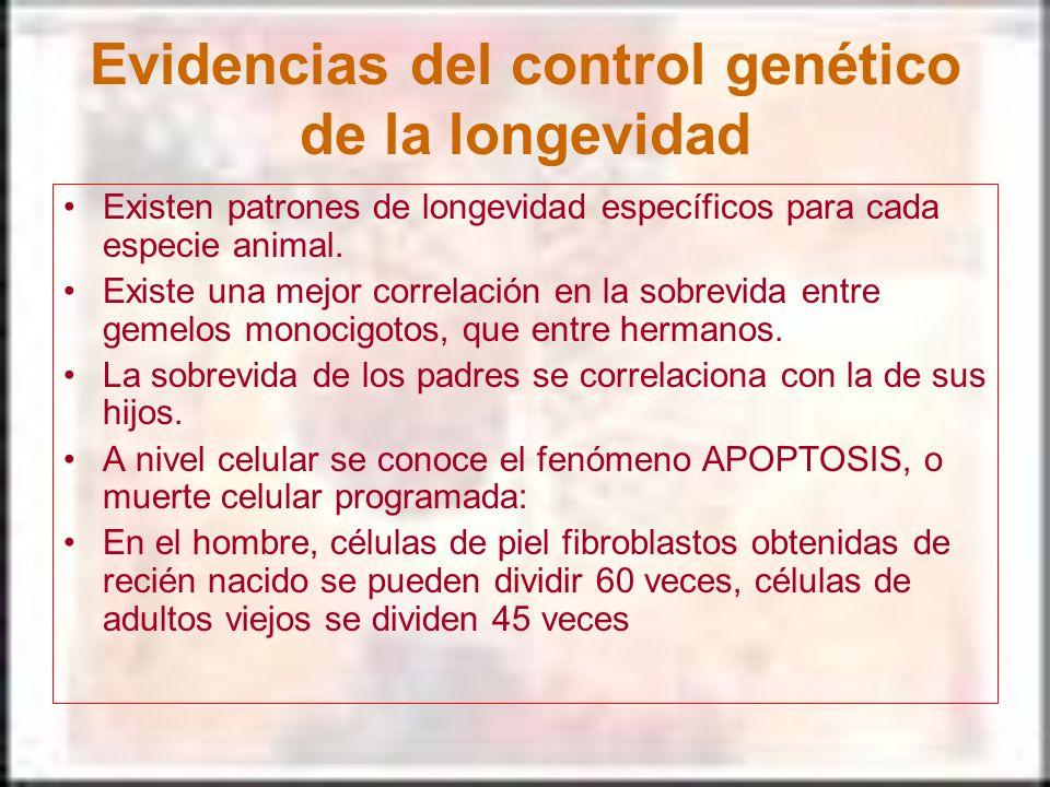 Evidencias del control genético de la longevidad Existen patrones de longevidad específicos para cada especie animal. Existe una mejor correlación en