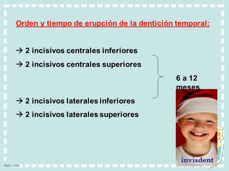 Orden y tiempo de erupción de la dentición temporal: 2 incisivos centrales inferiores 2 incisivos centrales superiores 6 a 12 meses 2 incisivos latera