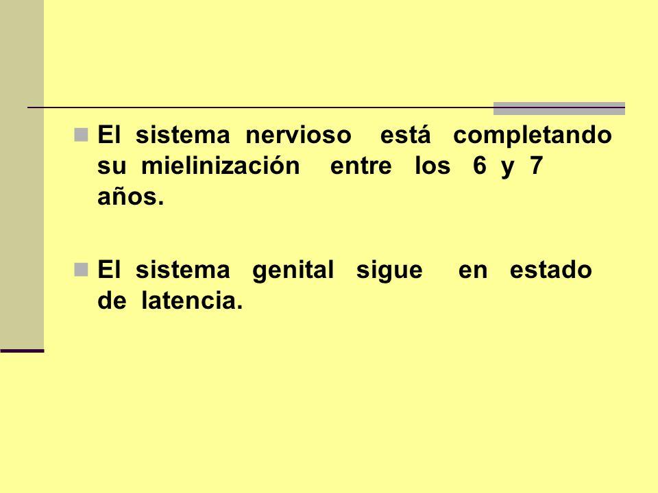 El sistema nervioso está completando su mielinización entre los 6 y 7 años. El sistema genital sigue en estado de latencia.