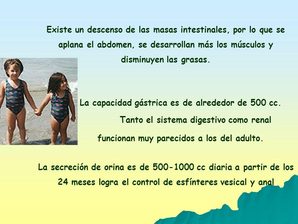 EL SISTEMA OSTEOMIOARTICULAR SUFRE MODIFICACIONES: AUMENTA DIMENSIÓN DE LOS HUESOS MODIFICANDO SU ESTRUCTURA INTERNA.