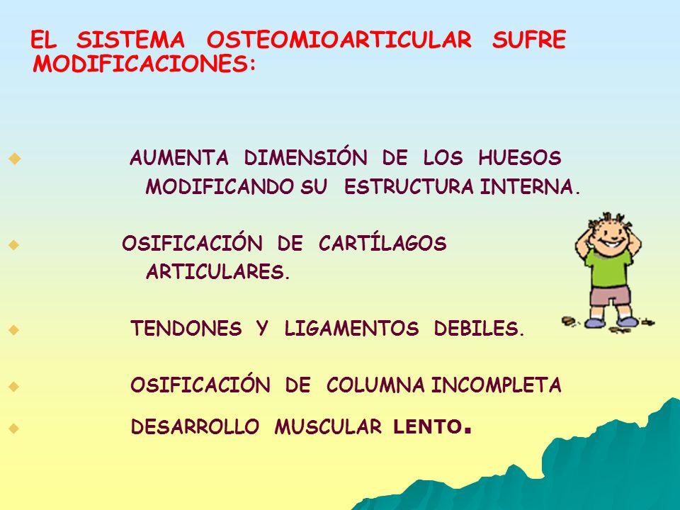 EL SISTEMA OSTEOMIOARTICULAR SUFRE MODIFICACIONES: AUMENTA DIMENSIÓN DE LOS HUESOS MODIFICANDO SU ESTRUCTURA INTERNA. OSIFICACIÓN DE CARTÍLAGOS ARTICU