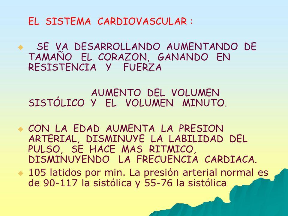 EL SISTEMA CARDIOVASCULAR : SE VA DESARROLLANDO AUMENTANDO DE TAMAÑO EL CORAZON, GANANDO EN RESISTENCIA Y FUERZA AUMENTO DEL VOLUMEN SISTÓLICO Y EL VO