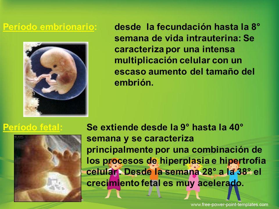 Período embrionario: desde la fecundación hasta la 8° semana de vida intrauterina: Se caracteriza por una intensa multiplicación celular con un escaso