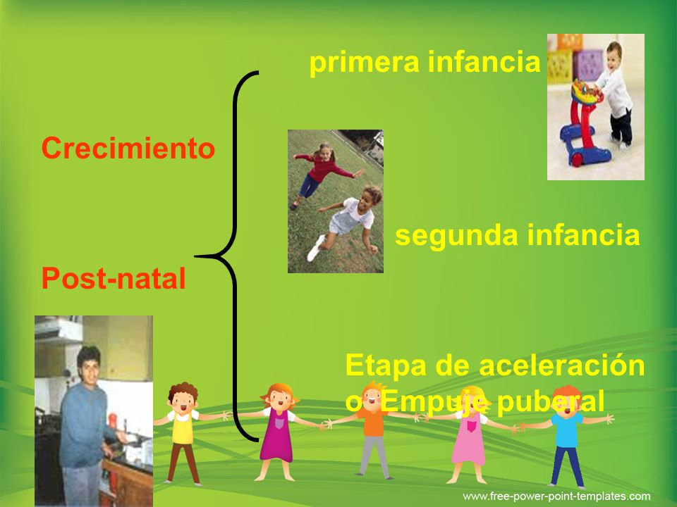 Primera infancia: Desde el nacimiento hasta los tres años de edad, y se caracteriza por un crecimiento rápido, si bien con una notable desaceleración en relación al período anterior.
