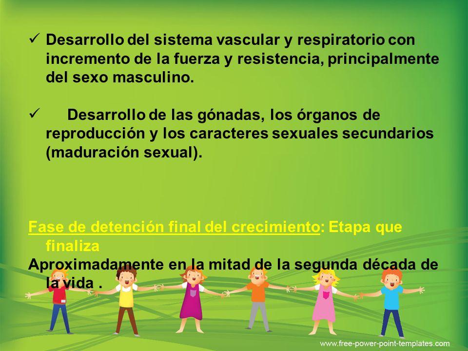 Desarrollo del sistema vascular y respiratorio con incremento de la fuerza y resistencia, principalmente del sexo masculino. Desarrollo de las gónadas