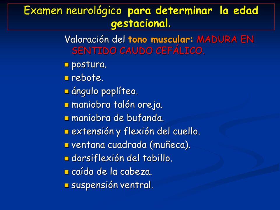 Examen neurológico para determinar la edad gestacional. Valoración del tono muscular: MADURA EN SENTIDO CAUDO CEFÁLICO. postura. postura. rebote. rebo