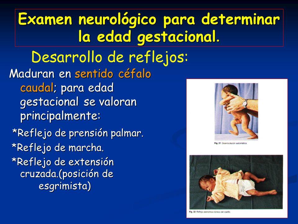 Examen neurológico para determinar la edad gestacional. Maduran en sentido céfalo caudal; para edad gestacional se valoran principalmente: *Reflejo de