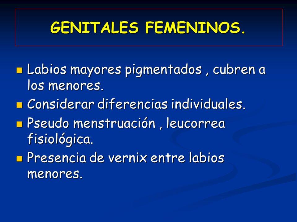 GENITALES FEMENINOS. Labios mayores pigmentados, cubren a los menores. Labios mayores pigmentados, cubren a los menores. Considerar diferencias indivi