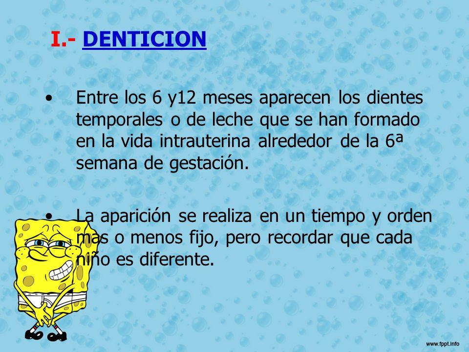 I.- DENTICION Entre los 6 y12 meses aparecen los dientes temporales o de leche que se han formado en la vida intrauterina alrededor de la 6ª semana de