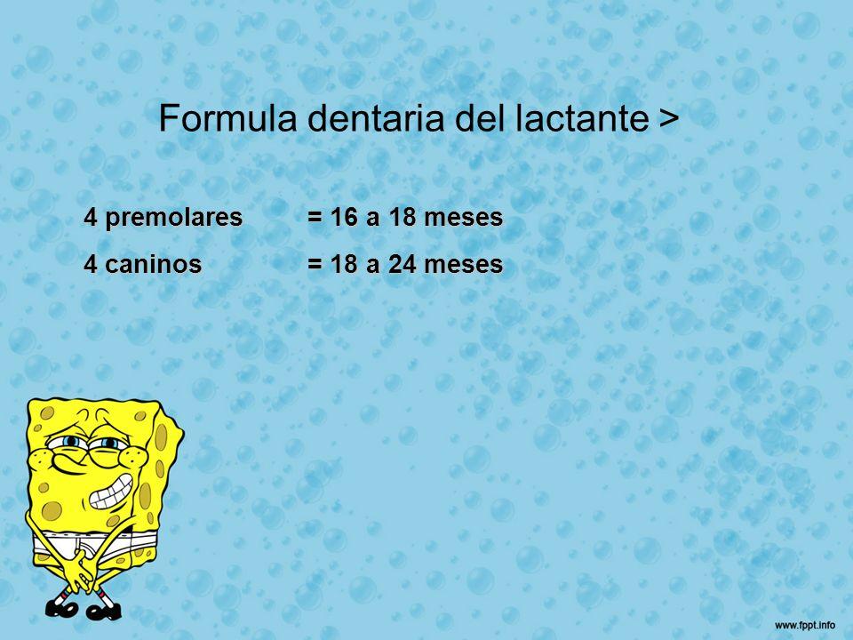 Formula dentaria del lactante > 4 premolares= 16 a 18 meses 4 caninos= 18 a 24 meses