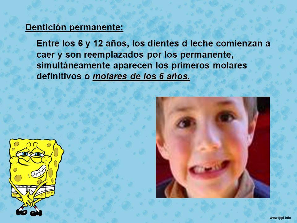 Dentición permanente: molares de los 6 años. Entre los 6 y 12 años, los dientes d leche comienzan a caer y son reemplazados por los permanente, simult