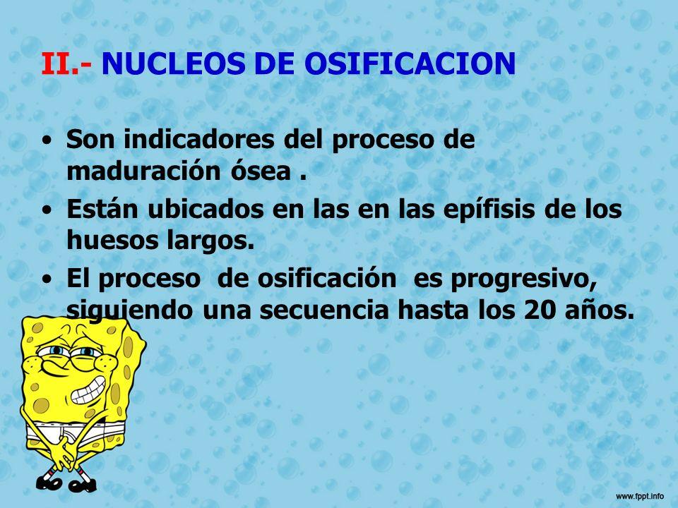 II.- NUCLEOS DE OSIFICACION Son indicadores del proceso de maduración ósea. Están ubicados en las en las epífisis de los huesos largos. El proceso de